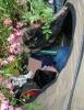 Que c'est beau de se réveiller au milieu des roses !