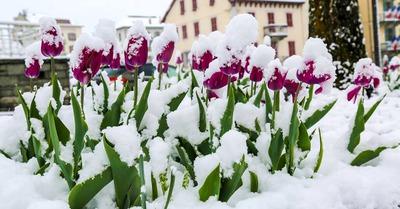 Après le printemps, l'hiver