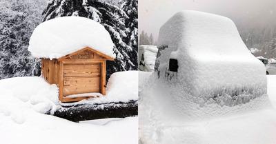 Livraison de neige fraîche dans les Alpes du Nord