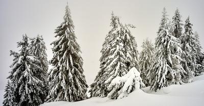 Météo : Un réveillon sous la neige !