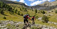 Camino Bike