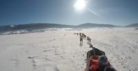 Alpen Team, école de traîneaux à chiens
