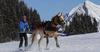 Ski jöering à Morgins